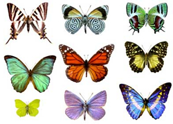 View All Butterflies Product Listings